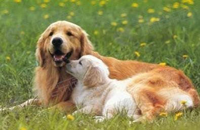 狗狗绝育前后主人应该做什么?